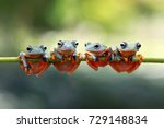 tree frog  java tree frog on... | Shutterstock . vector #729148834