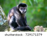 a monkey in the jungle. new... | Shutterstock . vector #729171379