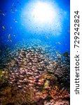 wide angle underwater landscape.... | Shutterstock . vector #729242824