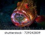 predator in action   big... | Shutterstock . vector #729242839