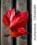 autumn maple leaf  | Shutterstock . vector #729260389