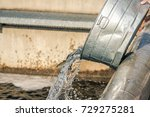 young juvenile salmon or trout...   Shutterstock . vector #729275281