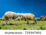 two sheep  fighting with their... | Shutterstock . vector #729347401