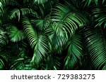 tropical palm leaves  floral... | Shutterstock . vector #729383275