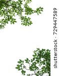tree branch isolated   to be... | Shutterstock . vector #729447589