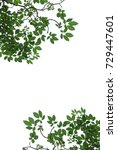 tree branch isolated   to be... | Shutterstock . vector #729447601