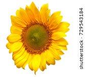 flower of sunflower isolated on ... | Shutterstock . vector #729543184