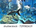 iridescent shark  mekong giant... | Shutterstock . vector #729582619