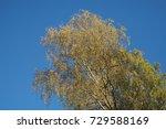tree in autumn  | Shutterstock . vector #729588169