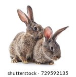two rabbits isolated on a white ...   Shutterstock . vector #729592135
