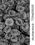 roses.  | Shutterstock . vector #729605035