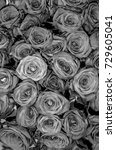 roses.  black and white photo. | Shutterstock . vector #729605041