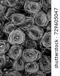 roses.  | Shutterstock . vector #729605047