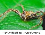 jumping spider. | Shutterstock . vector #729609541