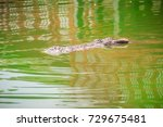 Small photo of Crocodiles have acute senses that them eyes, ears and nostrils are located on top of the head, allowing the crocodile to lie low in the water, almost totally submerged and hidden from prey.