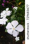 flowers | Shutterstock . vector #729683677