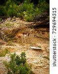 powerful red deer stag in in...   Shutterstock . vector #729694315