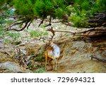 powerful red deer stag in in...   Shutterstock . vector #729694321