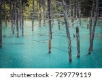 Small photo of Bare tree trunks emerge from Blue Pond, or Aoi-ike, a man-made water feature of Biei, Hokkaido, Japan; the teal blue color results from colloidal aluminum hydroxide