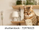 Stock photo angry cat with unhappy expression standing on desk in home 72978325