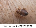 bed bug sucking blood | Shutterstock . vector #729822577