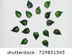the plants are laid out in the... | Shutterstock . vector #729851545