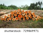 piled up harvested pine tree... | Shutterstock . vector #729869971