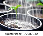 Pouring A Young Plant From A...