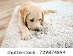 cute puppy on dirty rug at home | Shutterstock . vector #729874894