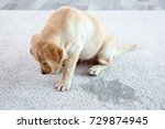 cute puppy sitting on carpet... | Shutterstock . vector #729874945