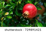 ripe pomegranate on the tree... | Shutterstock . vector #729891421