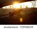 Two horses running and playing in the winter sunlight in a paddock 2