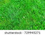 field of fresh green grass... | Shutterstock . vector #729945271