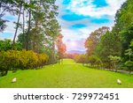 beautiful golf course on sunset.... | Shutterstock . vector #729972451