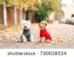 Stock photo portrait of two dogs friends west highland white terrier and yorkshire terrier playing in the park 730028524