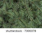 christmas background green fir... | Shutterstock . vector #7300378