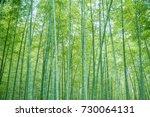 bamboo forest  | Shutterstock . vector #730064131