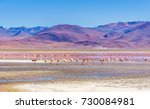 view on laguna colorada with... | Shutterstock . vector #730084981