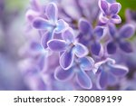 nice lilac | Shutterstock . vector #730089199