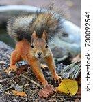 Squirrel Looks Surprised