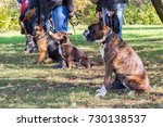 Stock photo group of dogs with owners at obedience class 730138537