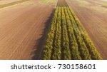 agricultural sprayer   tractor... | Shutterstock . vector #730158601