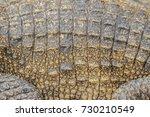 Small photo of Alive crocodile skin background. Crocodile skin pattern from alive body.