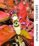 Small photo of Praying Mantis on acalypha leaves. Blending of brilliant colours.