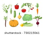 illustrations set of fresh... | Shutterstock . vector #730215061
