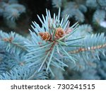 natural old christmas tree wood ... | Shutterstock . vector #730241515