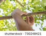 Grafting Lemon Trees