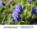 wild flower   Shutterstock . vector #730253275
