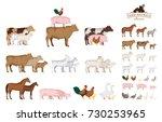 vector farm animals isolated on ... | Shutterstock .eps vector #730253965