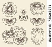 collection of kiwi fruit and... | Shutterstock .eps vector #730269391